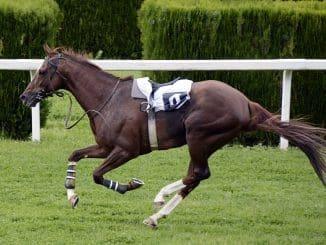 GG Horse Racing Tips