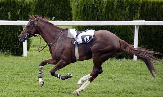 Best Triple Crown-Winning Racing Horses