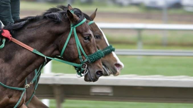 3 Tips for Beginners Betting on a Horse Race