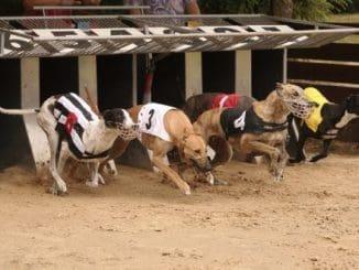 Greyhound Betting Site